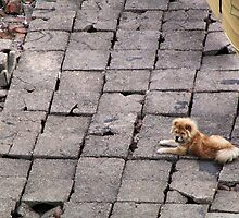 China 2009, Wuhan, Hubei, Dog on a rooftop by DaveLambert