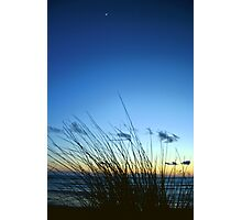 Night Reeds Photographic Print
