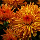 Mums the Word by Jamie Lee