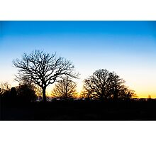 Sunset at RHS Gardens, Wisley Photographic Print