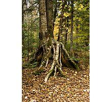 Tree on stilts! Photographic Print