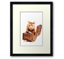 Hamster in a red box Framed Print