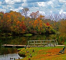 Gorgeous Autumn by Linda Miller Gesualdo