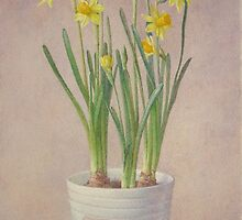 Narcissus Tete-a-tete by v0ff