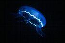 Jellyfish by Larry  Grayam