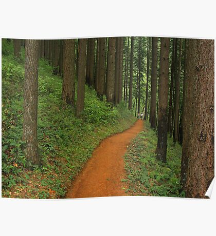 Forests Friends Poster