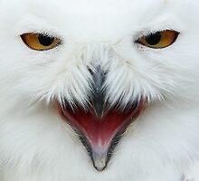 snowowl by CvDolleweerd