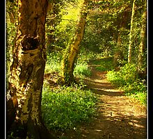 Woodland Path by graysweb