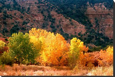 Western fall colors by Larry  Grayam