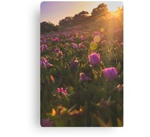 Sunset Flowers Canvas Print