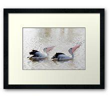 Pelican Synchronicity Framed Print
