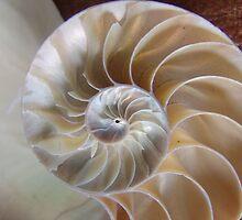 Nautilus Shell by florene welebny