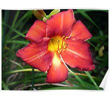 Sunrise Fire Flower Poster
