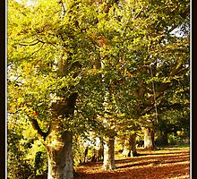 Boughton Trees by graysweb