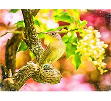 Painted Eastern House Wren In Spring Photographic Print