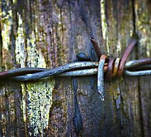 Barbed Wire by Aidan Clarkson