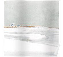 gulls Poster