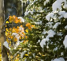 Nature Decorating for Winter by Ken Fortie