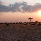 Homeward Bound - Tarangiri National Park, Tanzania by timstathers