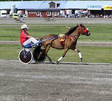 Gotland Pony #2 by MarianaEwa