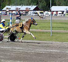 Gotland Pony #3 by MarianaEwa
