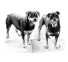 Sasha and Holly Photographic Print