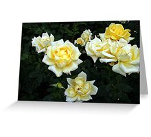 Berolina Rose Greeting Card