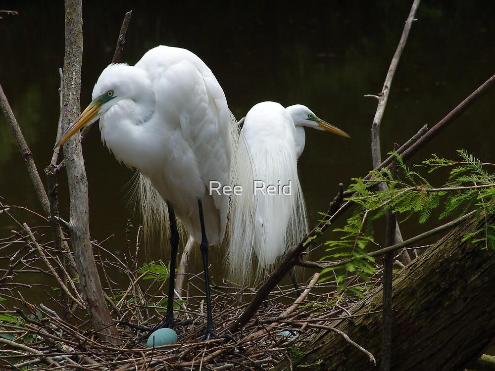 Egrets Nest by Ree  Reid