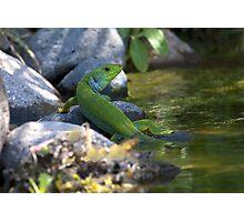 Balkan Green Photographic Print