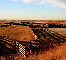 Flint Hills, KS by markdunn