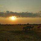 Loitering - Tarangiri National Park, Tanzania by timstathers