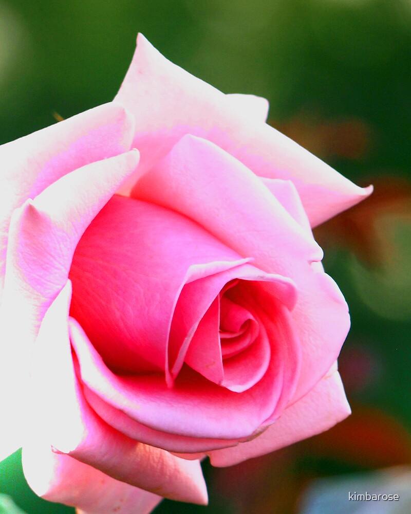 Pink Elegance  by kimbarose