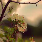 Pink May by shalisa