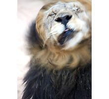 Lion Shaking Off Water Photographic Print