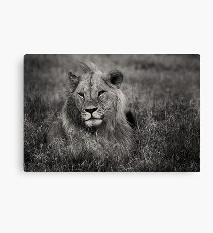 Male Lion in Kenya Canvas Print