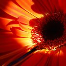 Gerberas.  Orange Delight. by Lozzar Flowers & Art