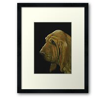 Bloodhound Framed Print