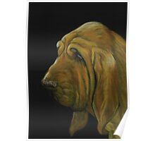 Bloodhound Poster