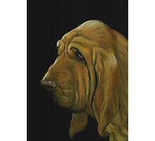 Bloodhound Photographic Print