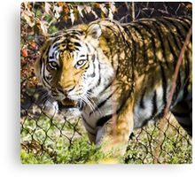 Ferocious Feline Canvas Print