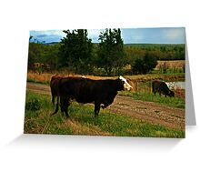 Bovine Visitors Greeting Card