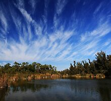 Lakes regional park by kathy s gillentine