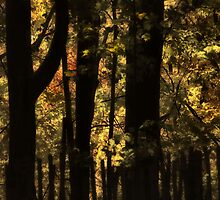 Trees Aglow by Elaine  Manley