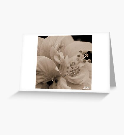simplistic beauty Greeting Card