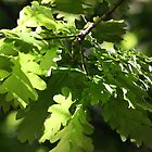 Spring Oak Leaves by Steven Carpinter