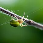 mother nature's artist: the spider by janko