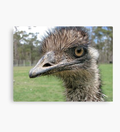 Ostrich (in Tassy zoo) Canvas Print