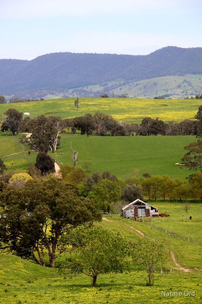 Daisy Farm by Natalie Ord