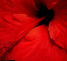Red Temptation, Hibiscus  by Guy Tschiderer