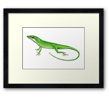 Green Anole Lizard Framed Print